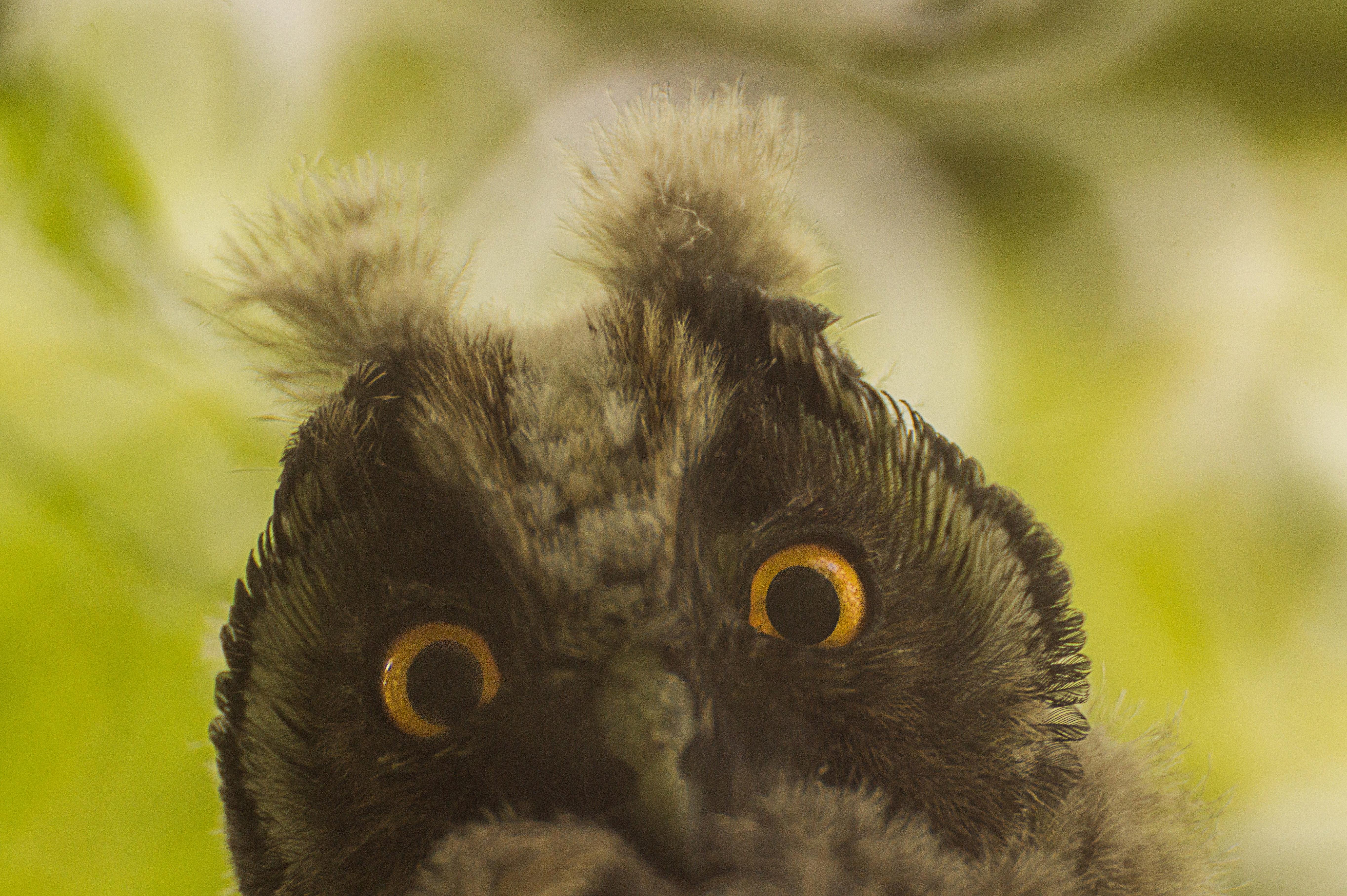 Pöllöstä voi napata hassun kuvan!